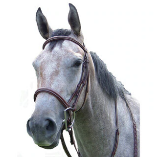 Pro-Trainer Fancy Stitched Raised Hunt Bridle - Havana