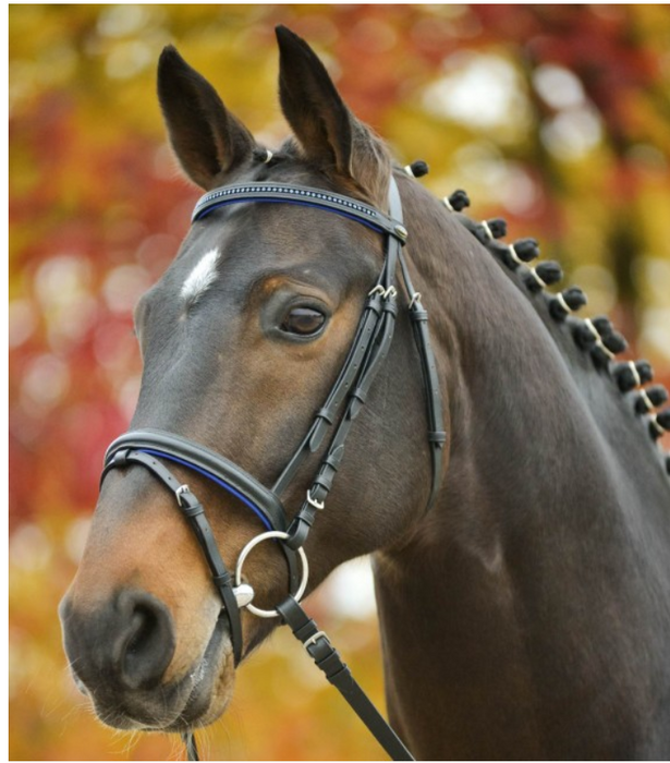 "Waldhausen ""Diamond"" Bridle - Black with Blue Accents"