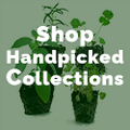 Shop Handpicked Collections