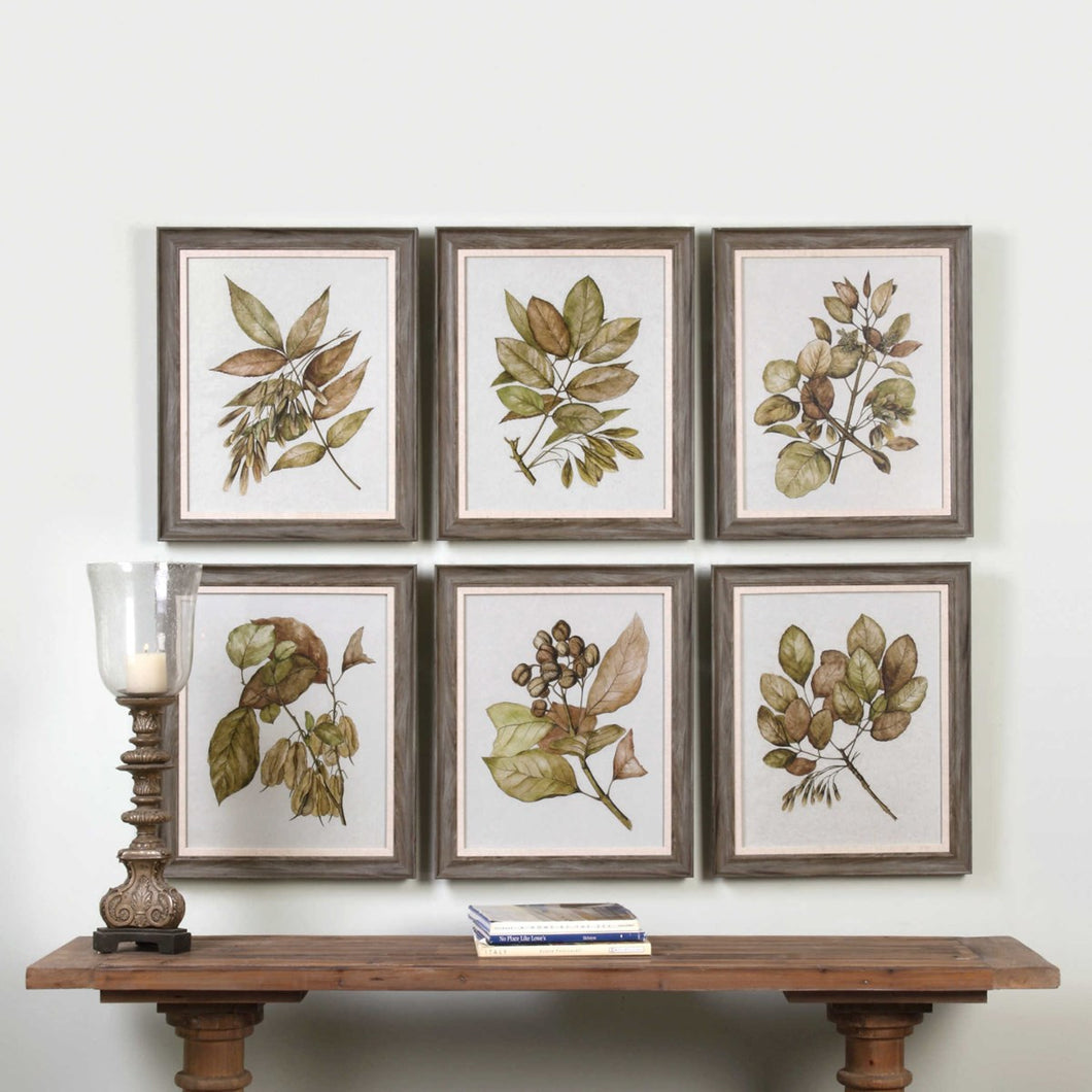 Uttermost - Seedlings Framed Wood Toned Prints (6)