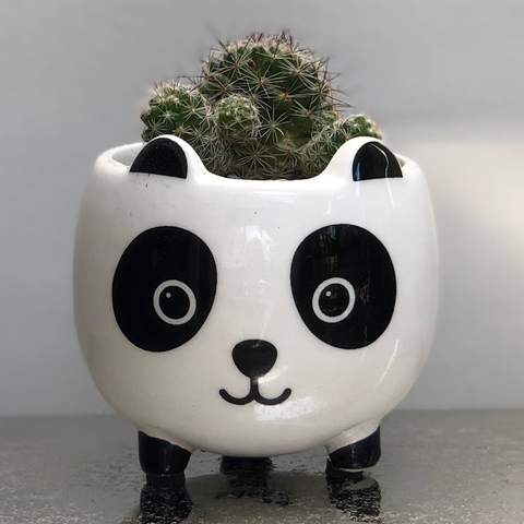 Panda Bear Ceramic Planter with legs - Cactus Succulent Planting Kit Gift
