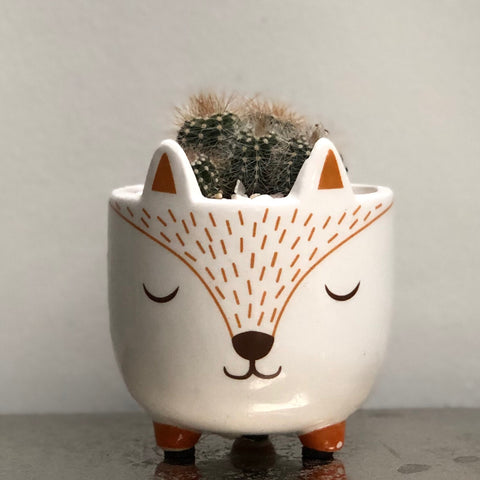 Fox Ceramic Planter - Cactus Succulent Planting Kit