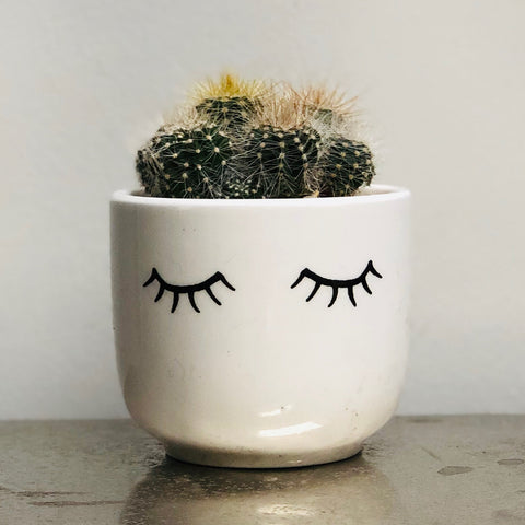 Eyes Shut Eyelashes Ceramic Planter Succulent Cactus Kit