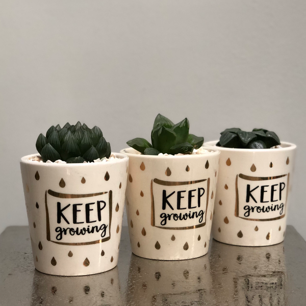 Keep Growing Ceramic Planter Cactus Succulent Planting Kit