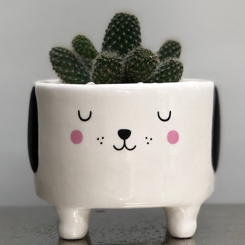 Dog Ceramic Planter with Legs - Cactus Succulent Planting Kit Gift