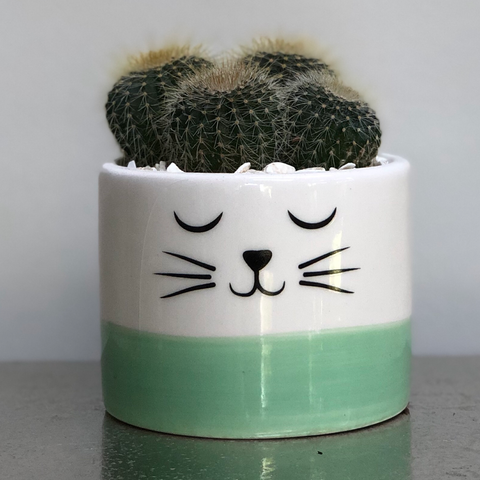 Mint Green Ceramic Cat Planter Cactus Succulent Planting Kit