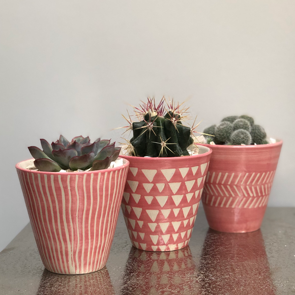 Pink and White Patterned Planter Set Cactus Succulent Kit