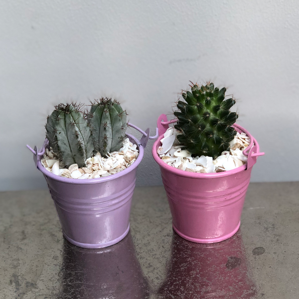Mini Metal Buckets Cactus Planting Kit Gift
