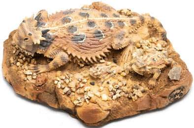 Family on Rock: 3 Horned Lizards - Base 5 inches