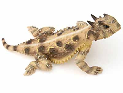 "Texas 4"" Stretch Horned Lizard, Painted Figurine"