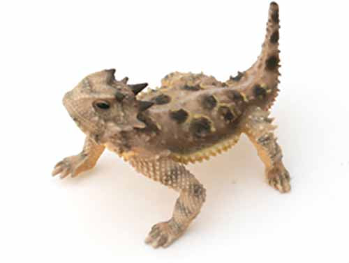 "Texas 2.5"" Horned Lizard, Female, Painted Figurine with Tail Up"
