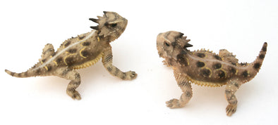Texas Pair: Male - Female - Painted Figurines