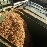 Coffee chaff in green composting bins