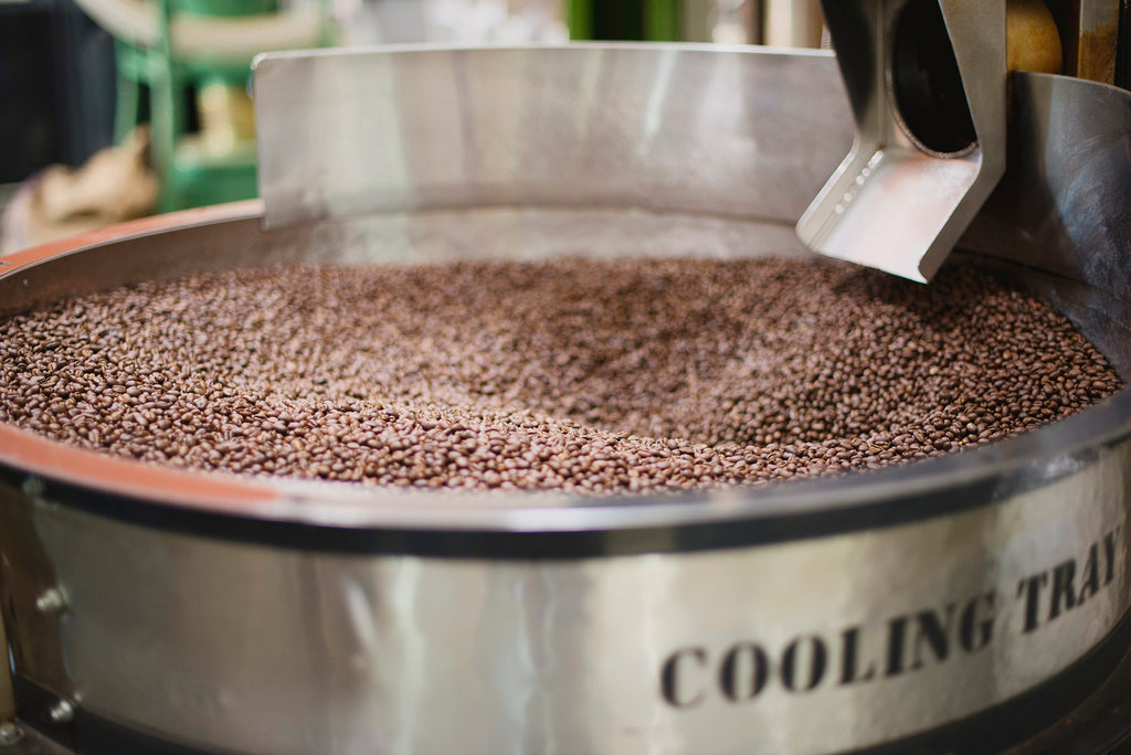 Freshly roasted coffee beans in silver metal cooling tray