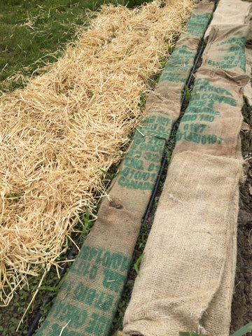 Organic fibre coffee bags and straw placed on garden