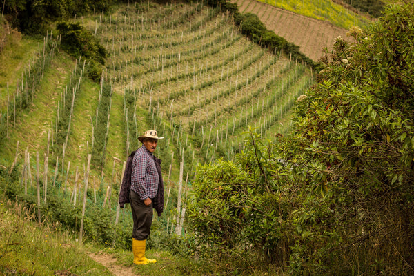 Golden berry farmer in yellow rubber boots, standing in vineyard
