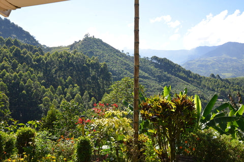 Colombia landscape, coffee trees, mountains
