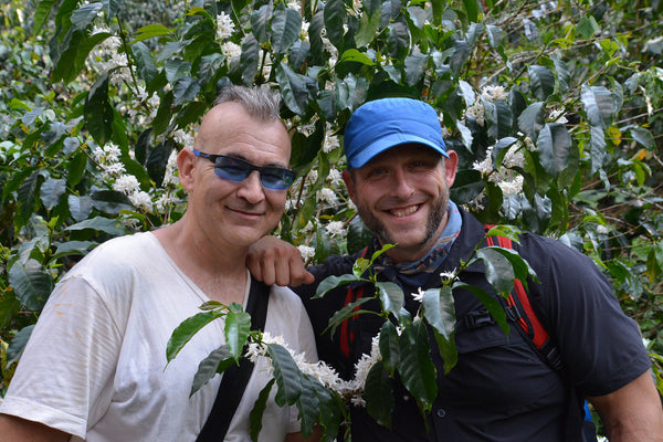 Two men stand beside blossoming coffee tree
