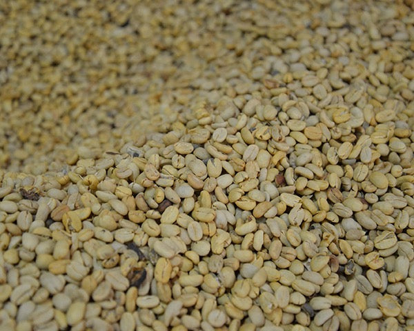 Close up green coffee beans