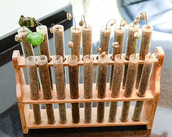 Test tubes grow coffee sprouts