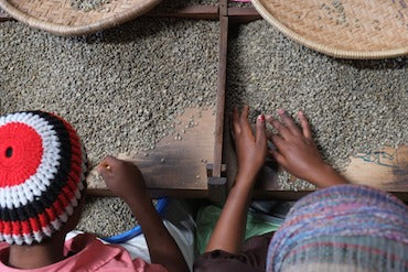 Top view workers hand sorting coffee beans