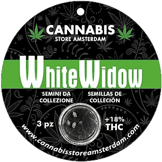 Pack de 3 semillas WHITE WIDOW - Weeds.live