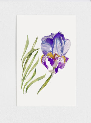 Load image into Gallery viewer, Iris Print