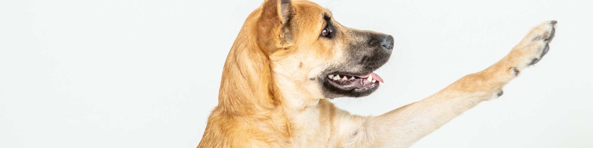 Hot Spots on Dogs: Causes, Symptoms, and Treatments