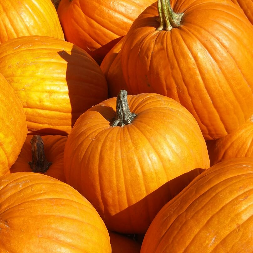 OSC Connecticut Field Pumpkin Seeds - Packet