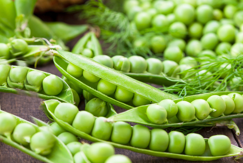 Green Arrow Pea Seeds (English Type) (62 Days) - 1/2 lb - Bulk