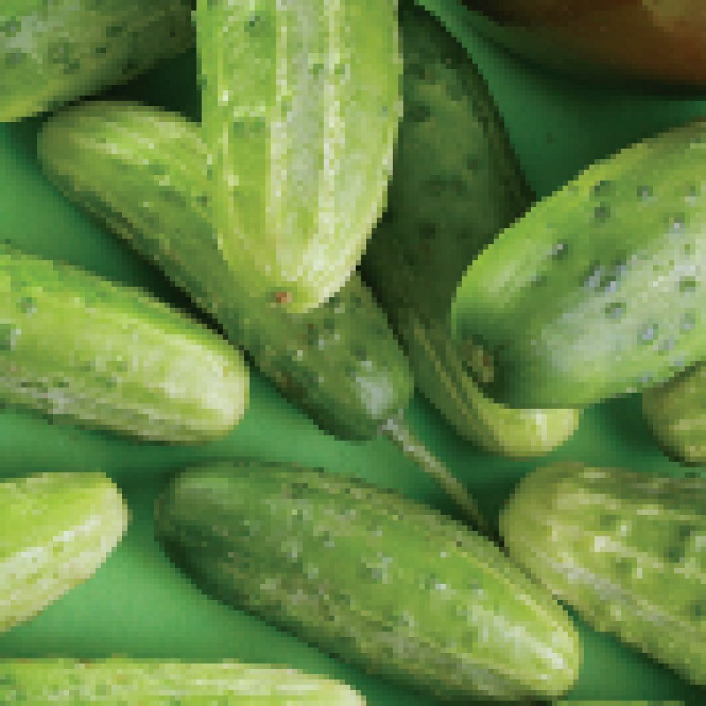 Chicago Cucumber Seeds (Pickling Type) (58 days) - 1/4 Cup - Bulk