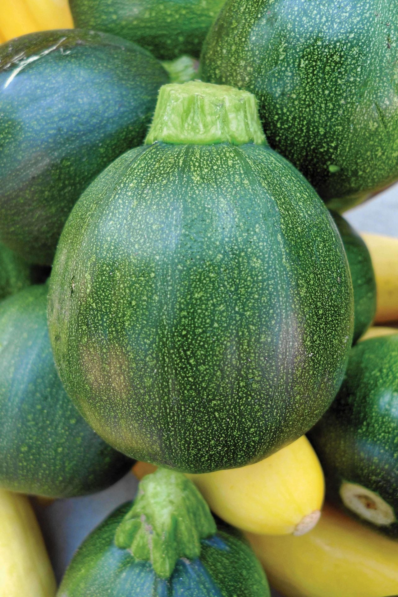 OSC Ronde De Nice Zucchini Seeds (Aimers International) - Packet