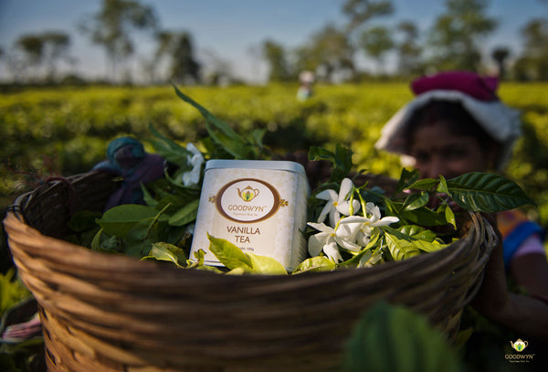 Organic Tea India Goodwyn