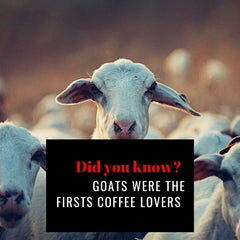 """A black cut out stating """"do you know, goats were the first coffee lovers"""" placed on an image with goats."""