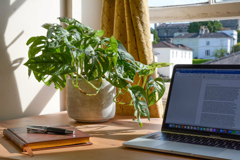 Work from Home with Plants
