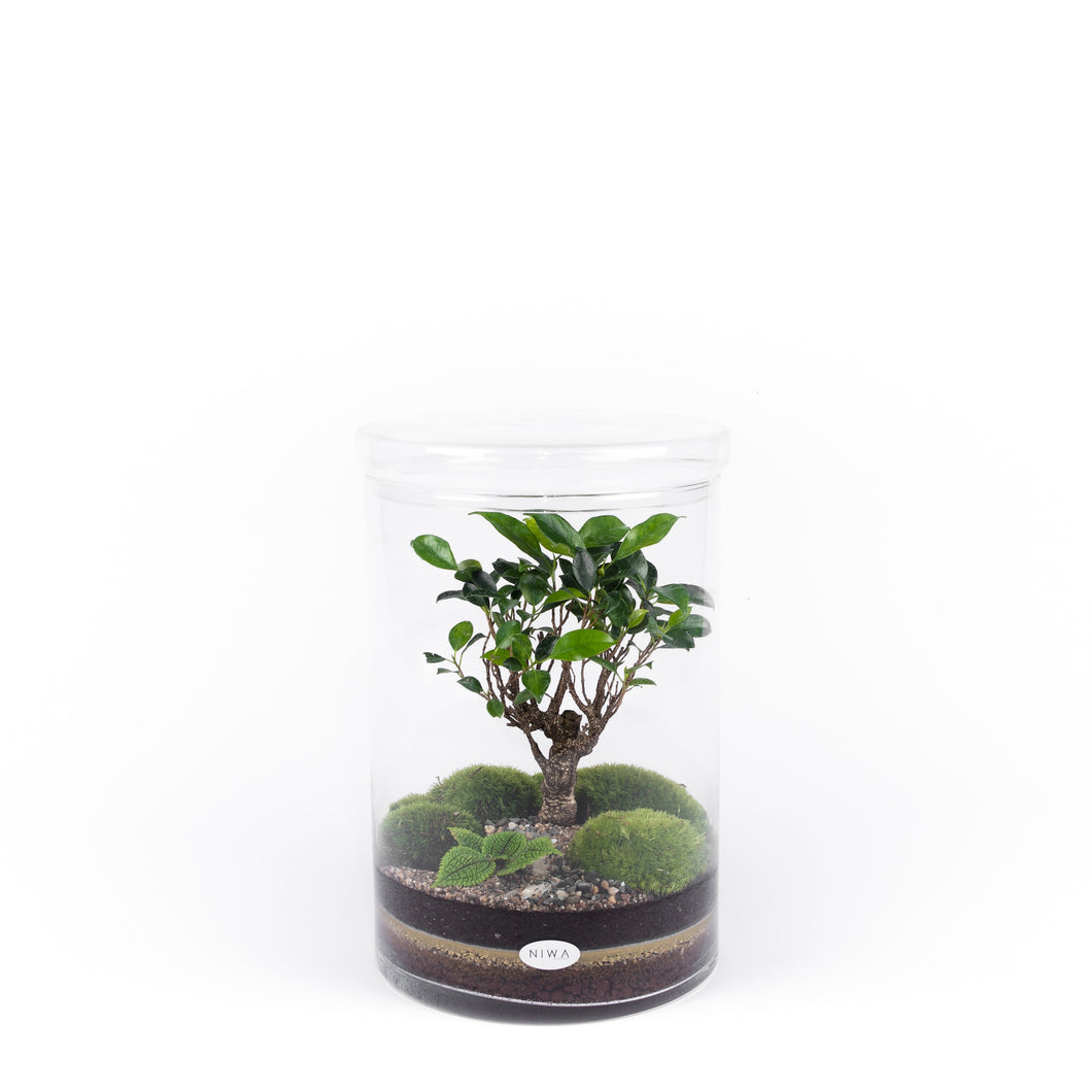 Niwa Design Seattle Terrarium