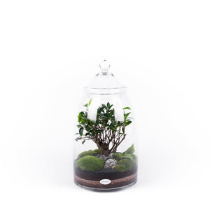 Niwa Design Dream Terrarium