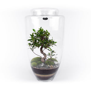 Niwa Design Manhattan Terrarium