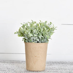 Dusty Plant in Paper Pot