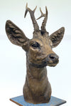 'Roe Buck' by David Cemmick
