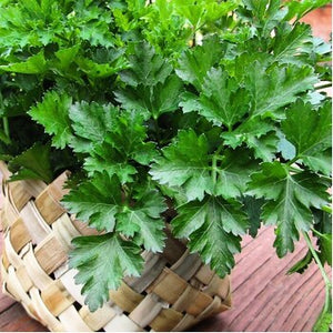 2x Herbs Plant Pot Kit