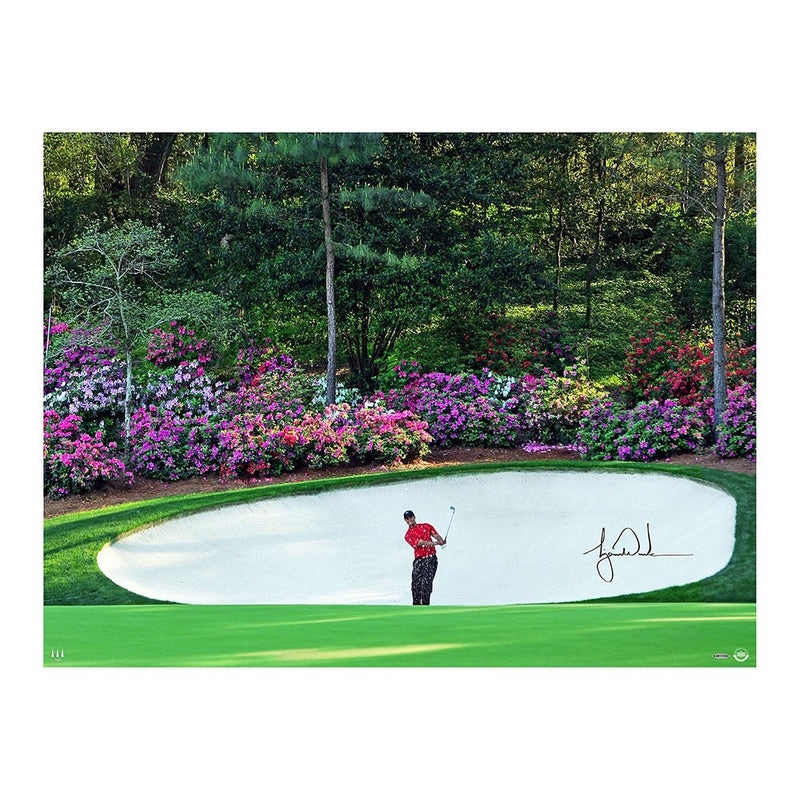 Tiger Woods Azalea 40x30 Photo Framed