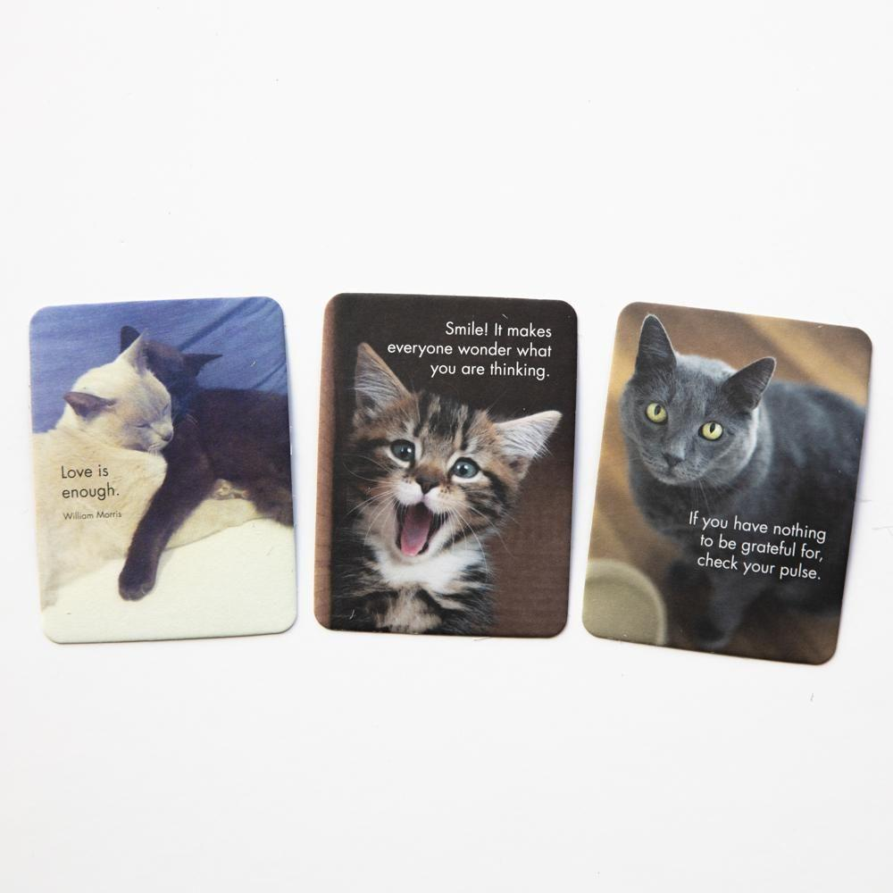Affirmation Cards:  Wise Cats - Coorie Doon