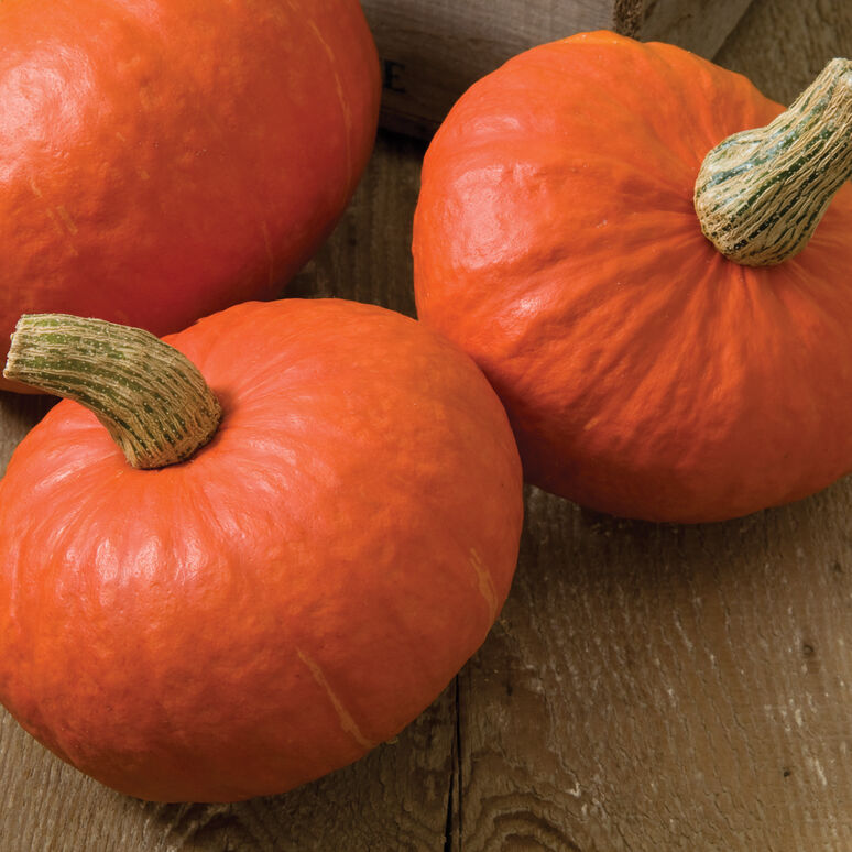 Winter Squash: Sunshine Kabocha