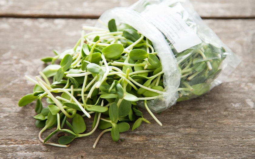 Microgreens: Sunflower Shoots