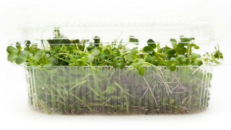 Microgreens: Greek Isles Microgreens