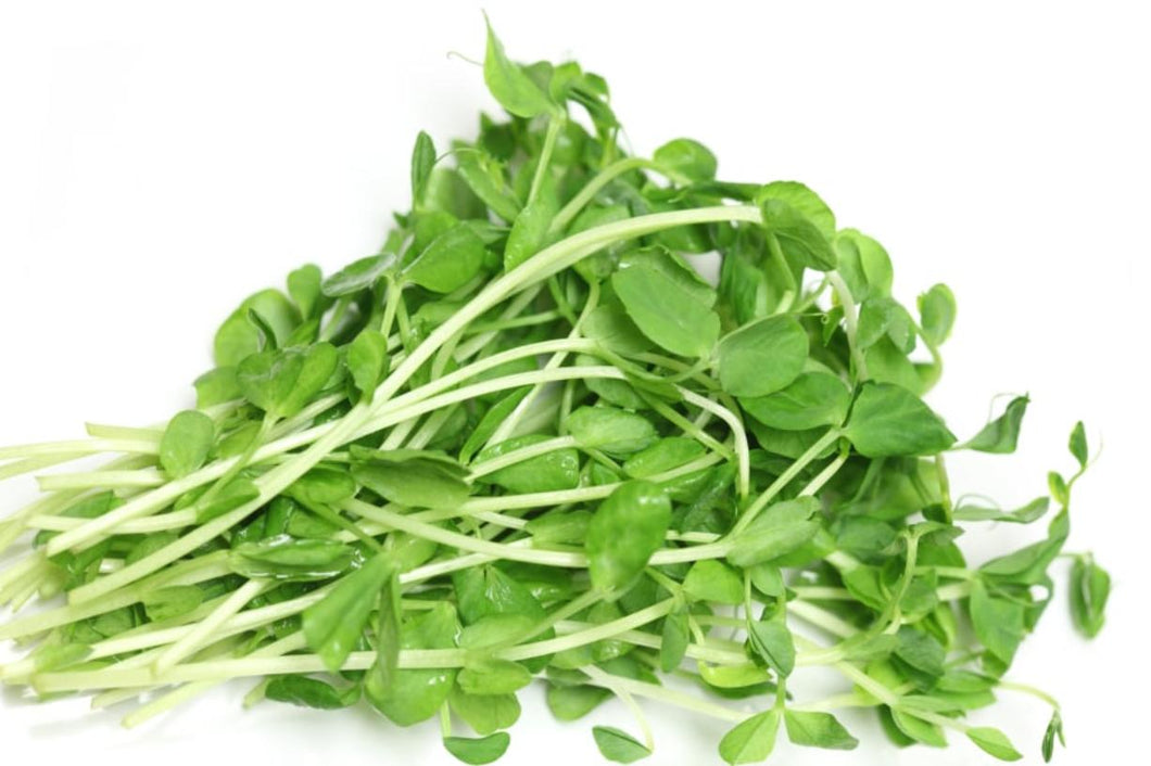 Microgreens: Sweet Pea Shoots