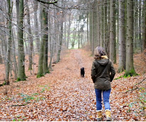 5 self-care tips. wellness tips for reducing anxiety and stress. Walk in the woods with dog