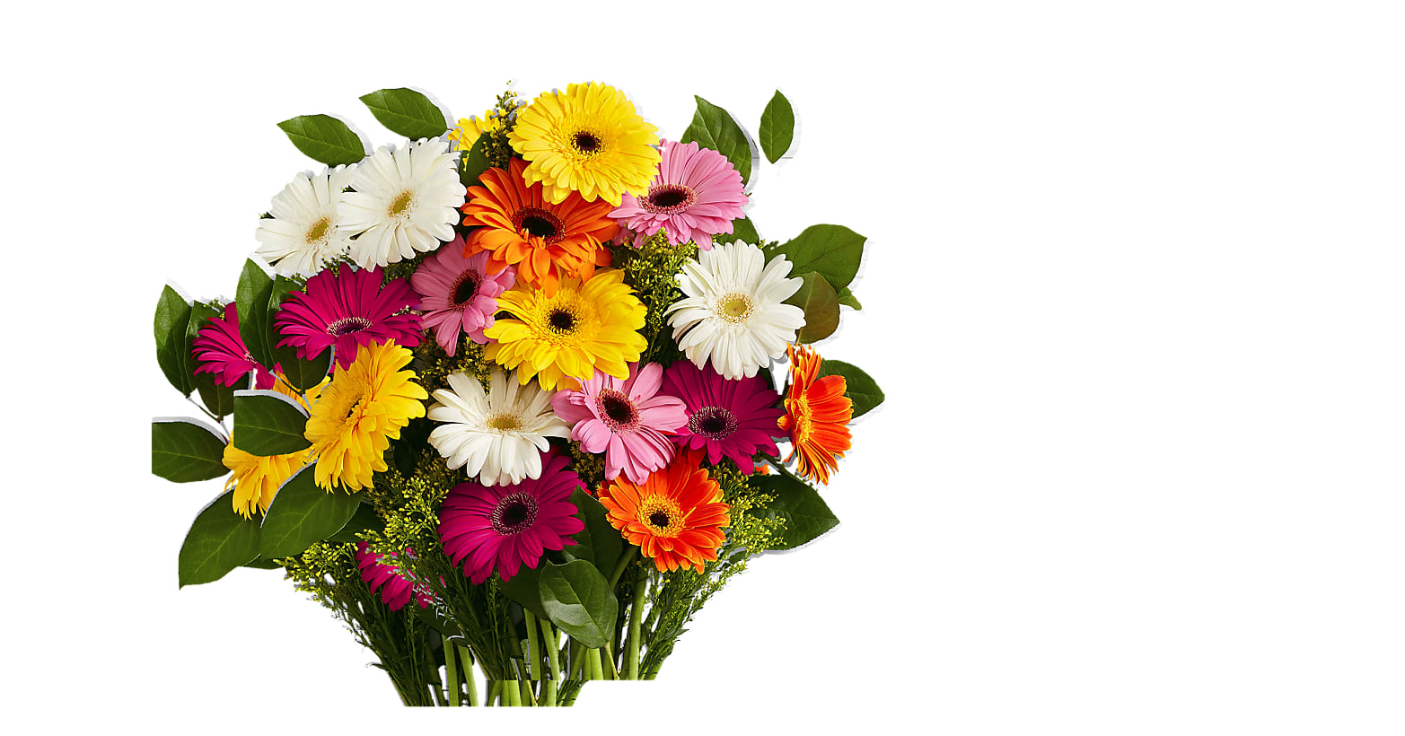 Colorful Gerbera Daisies - Image 1 Of 4