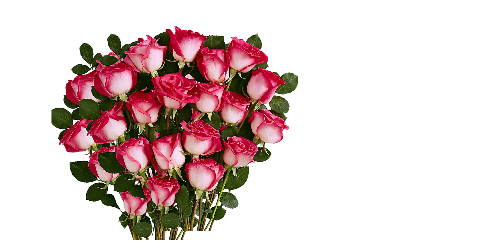 18 Pink Pearl Roses - Image 1 Of 4